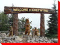 Bears - Chetwynd, British Columbia
