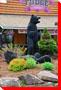 Black Bears - Sault Ste. Marie, Ontario