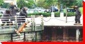 Fishing Bears - Sault Ste. Marie, Ontario