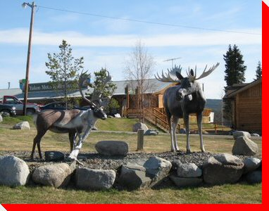 Caribou and Moose - Teslin, Yukon